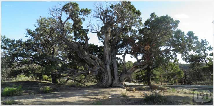 US191_beautiful_tree_739x367